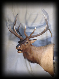 jake_rowe_taxidermy_website002008.jpg