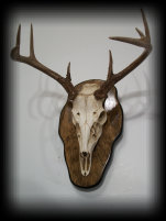 jake_rowe_taxidermy_website012023.jpg