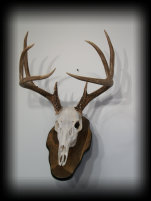 jake_rowe_taxidermy_website012025.jpg