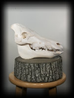jake_rowe_taxidermy_website012026.jpg