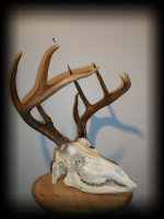 jake_rowe_taxidermy_website012036.jpg