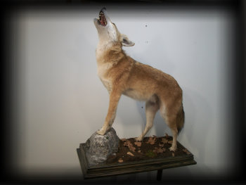 jake_rowe_taxidermy_website013006.jpg