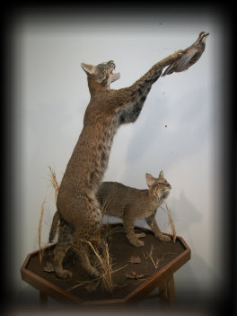 jake_rowe_taxidermy_website013007.jpg