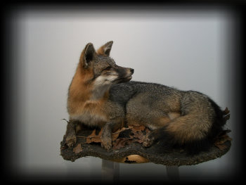 jake_rowe_taxidermy_website013009.jpg