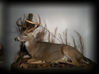 jake_rowe_taxidermy_website013029.jpg