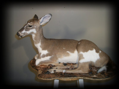 jake_rowe_taxidermy_website013030.jpg