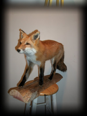 jake_rowe_taxidermy_website013031.jpg