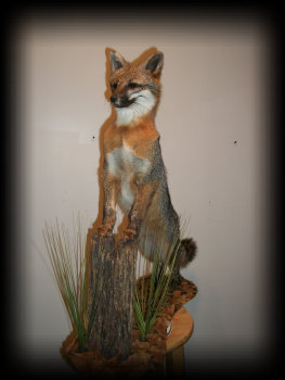 jake_rowe_taxidermy_website013032.jpg