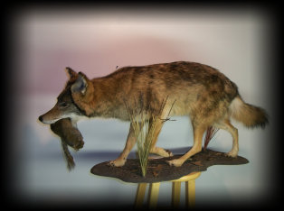 jake_rowe_taxidermy_website013033.jpg